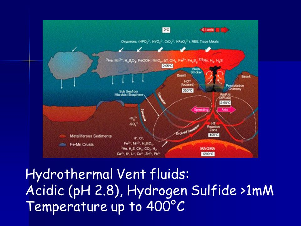 Hydrothermal Vent fluids: Acidic (pH 2.8), Hydrogen Sulfide >1mM Temperature up to 400°C