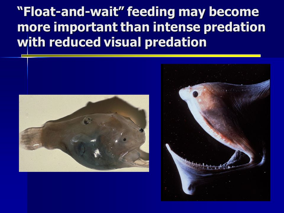 Float-and-wait feeding may become more important than intense predation with reduced visual predation