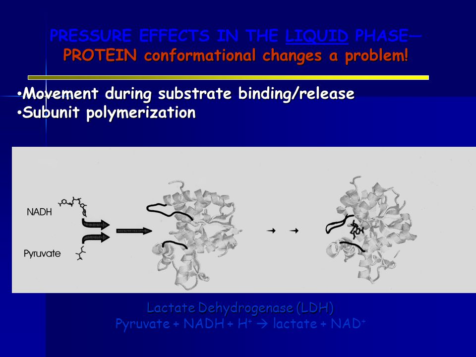 PRESSURE EFFECTS IN THE LIQUID PHASE— PROTEIN conformational changes a problem.