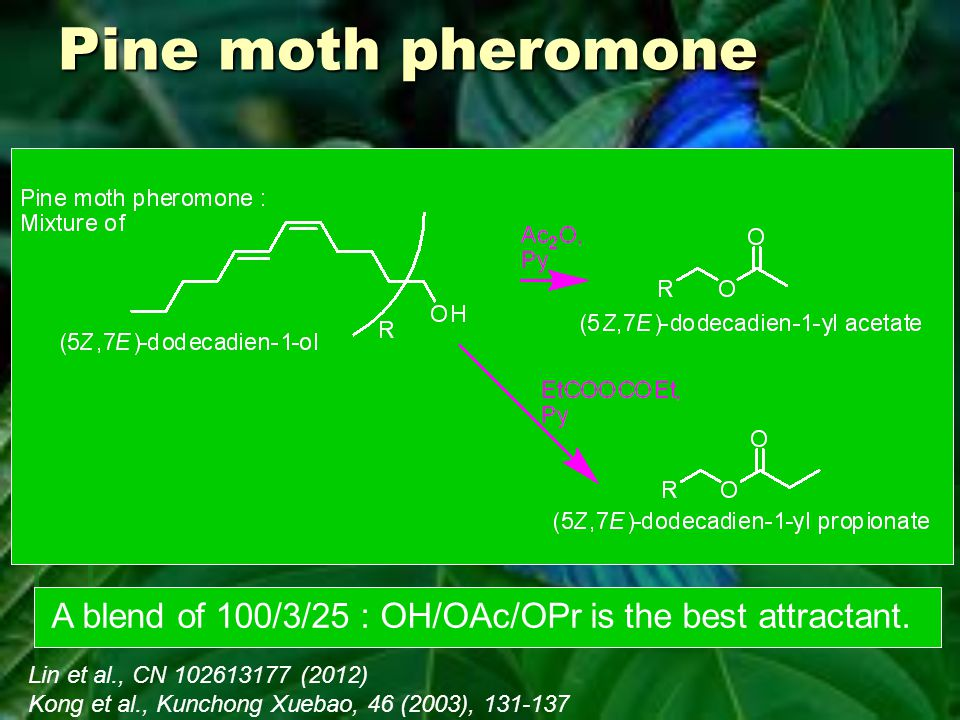 Pine moth pheromone A blend of 100/3/25 : OH/OAc/OPr is the best attractant.