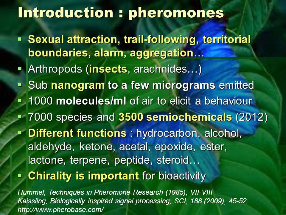 Flea beetle male pheromone Weinreb amide Mori, Tetrahedron: Asymmetry, 16 (2005), 685–692