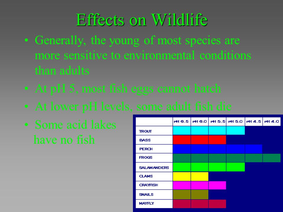 Effects on Wildlife Generally, the young of most species are more sensitive to environmental conditions than adults At pH 5, most fish eggs cannot hat