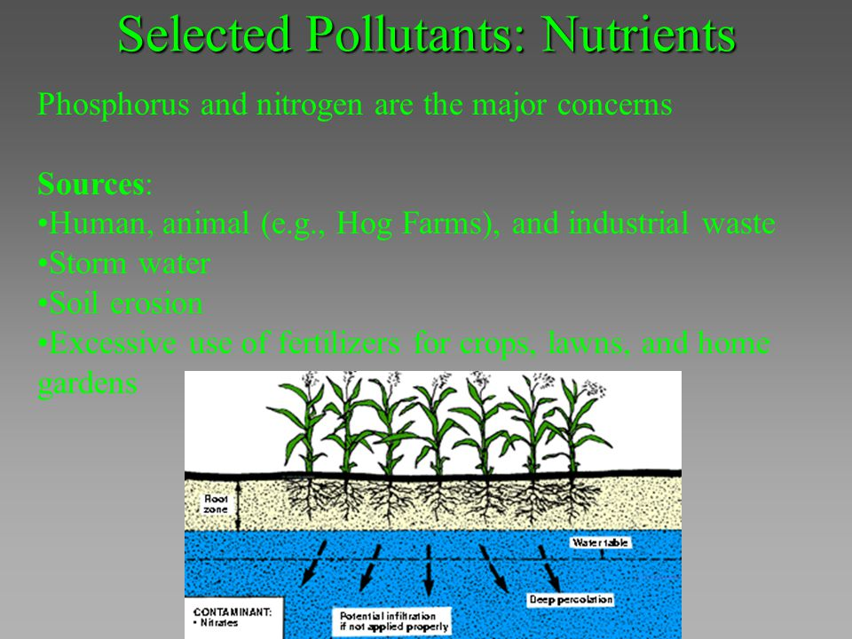Selected Pollutants: Nutrients Phosphorus and nitrogen are the major concerns Sources: Human, animal (e.g., Hog Farms), and industrial waste Storm wat