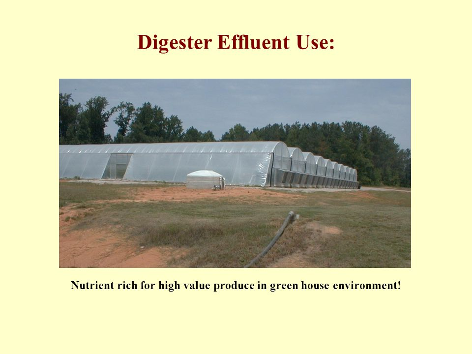 Digester Effluent Use: Nutrient rich for high value produce in green house environment!