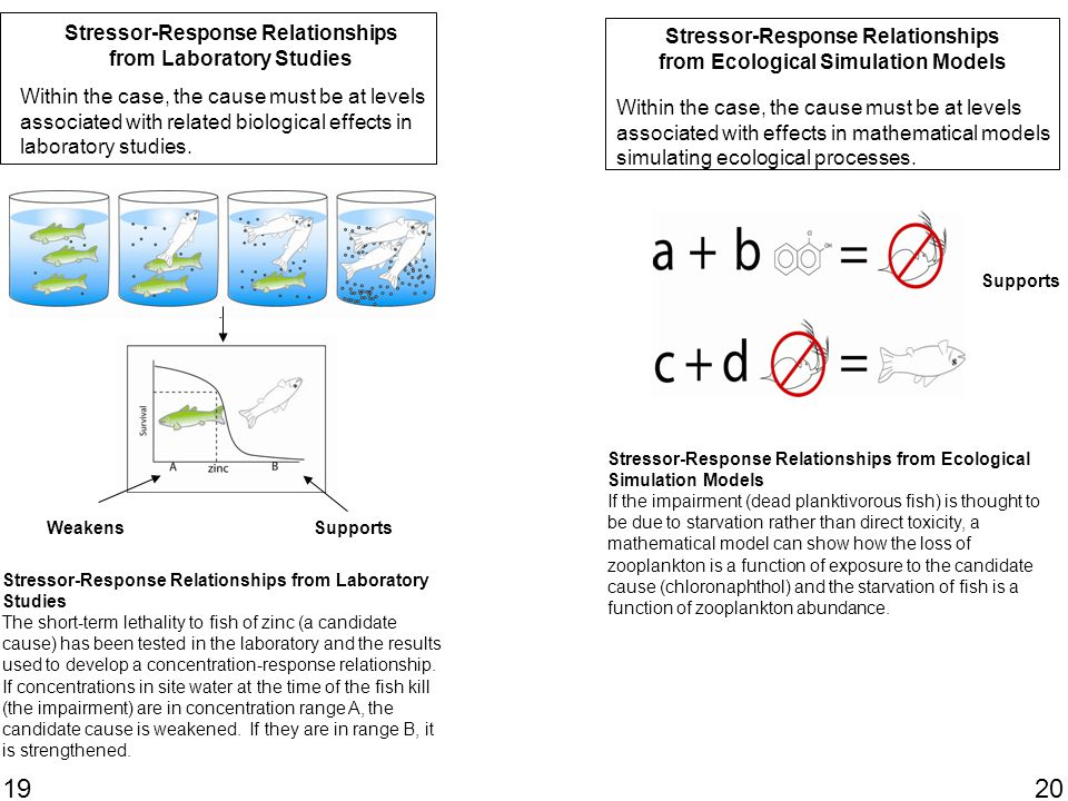 19 Stressor-Response Relationships from Laboratory Studies SupportsWeakens Within the case, the cause must be at levels associated with related biological effects in laboratory studies.