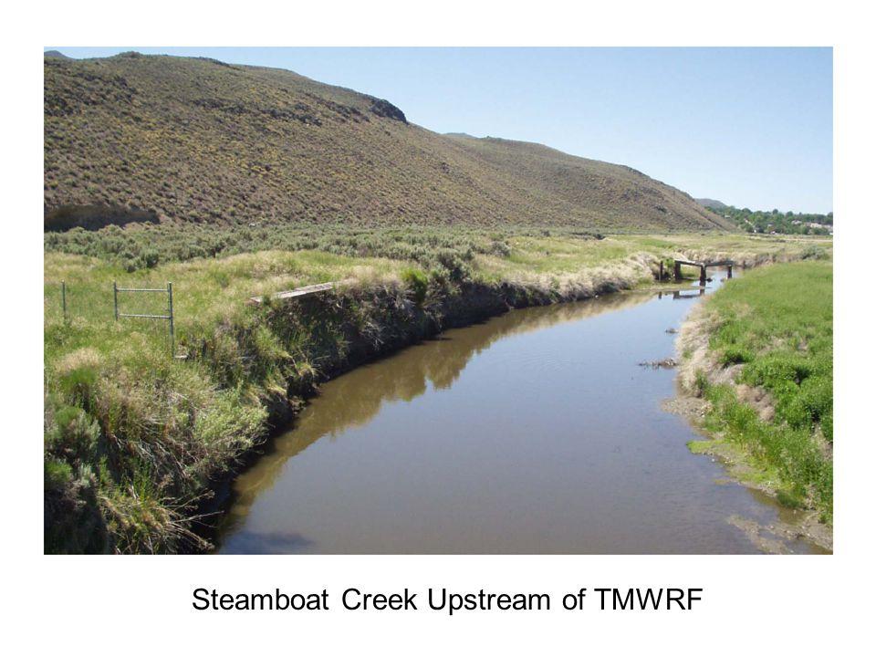 Steamboat Creek Upstream of TMWRF