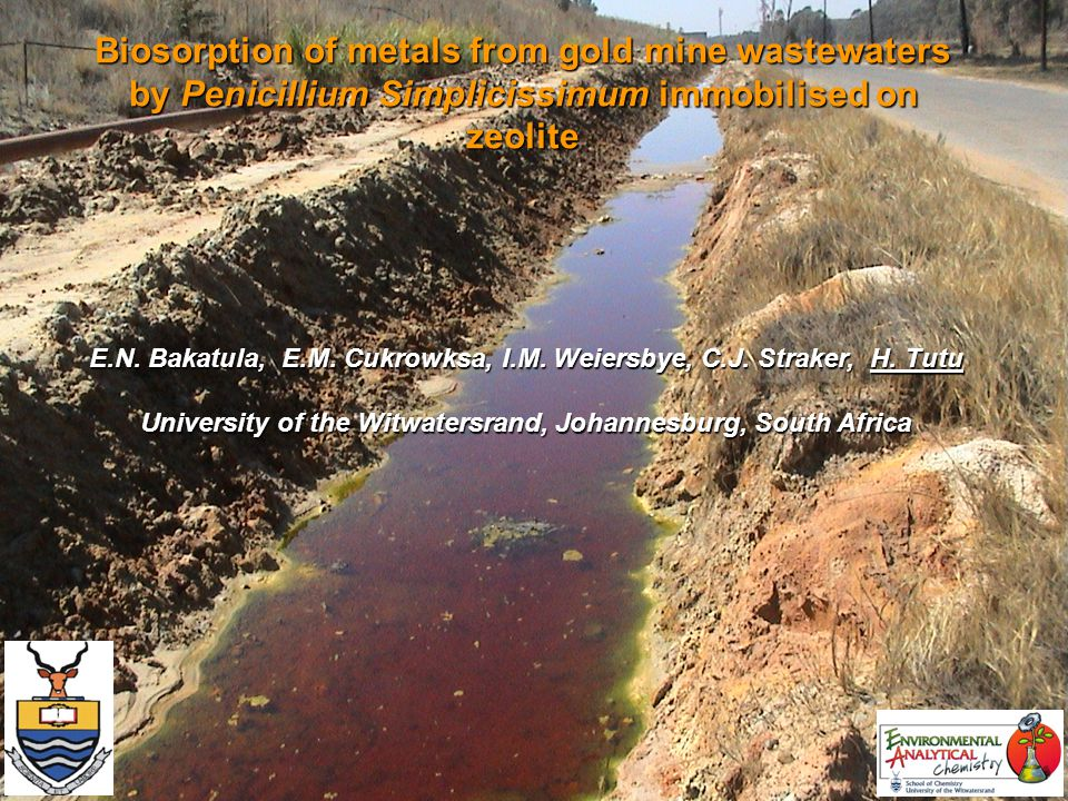Biosorption of metals from gold mine wastewaters by Penicillium Simplicissimum immobilised on zeolite E.N.