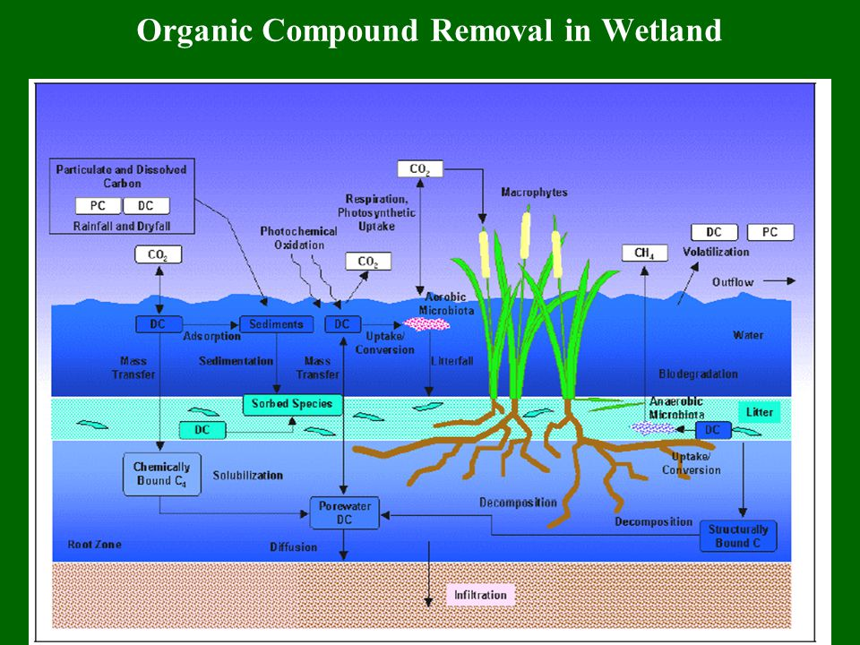 Abiotic Mechanisms Treating Inorganic Compounds in Wetland