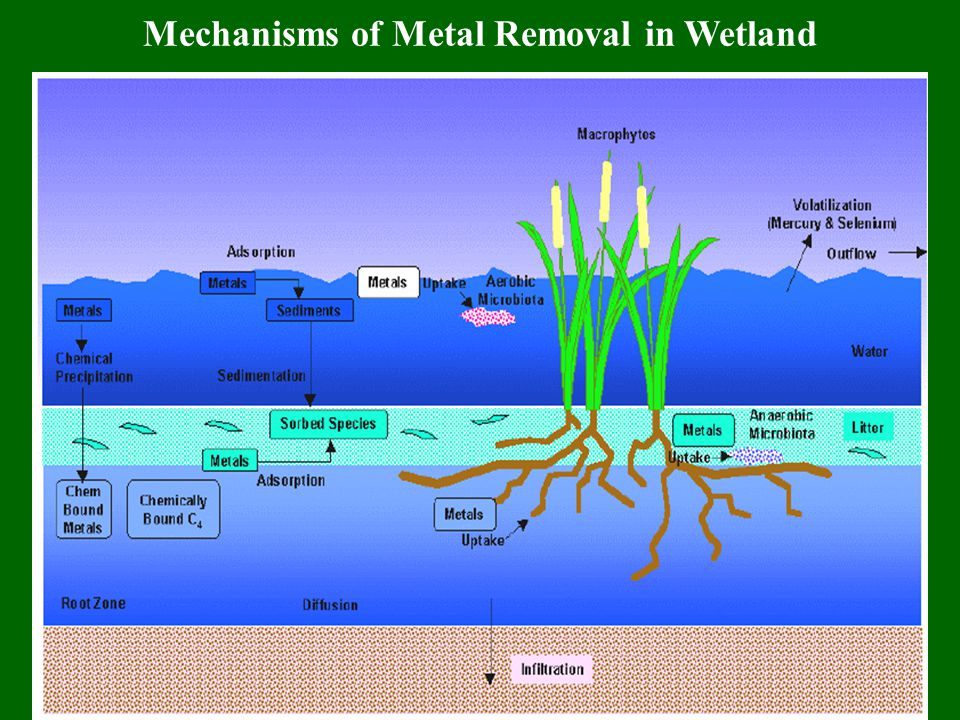 Organic Compound Removal in Wetland