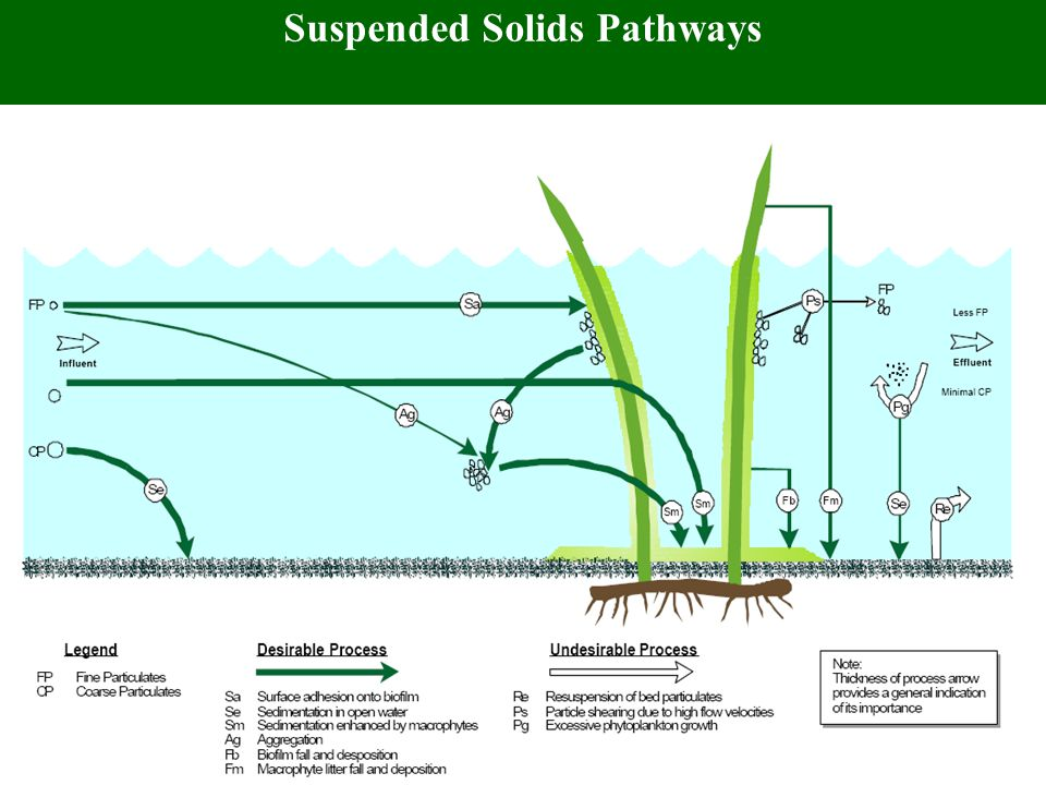Mechanisms of Metal Removal in Wetland
