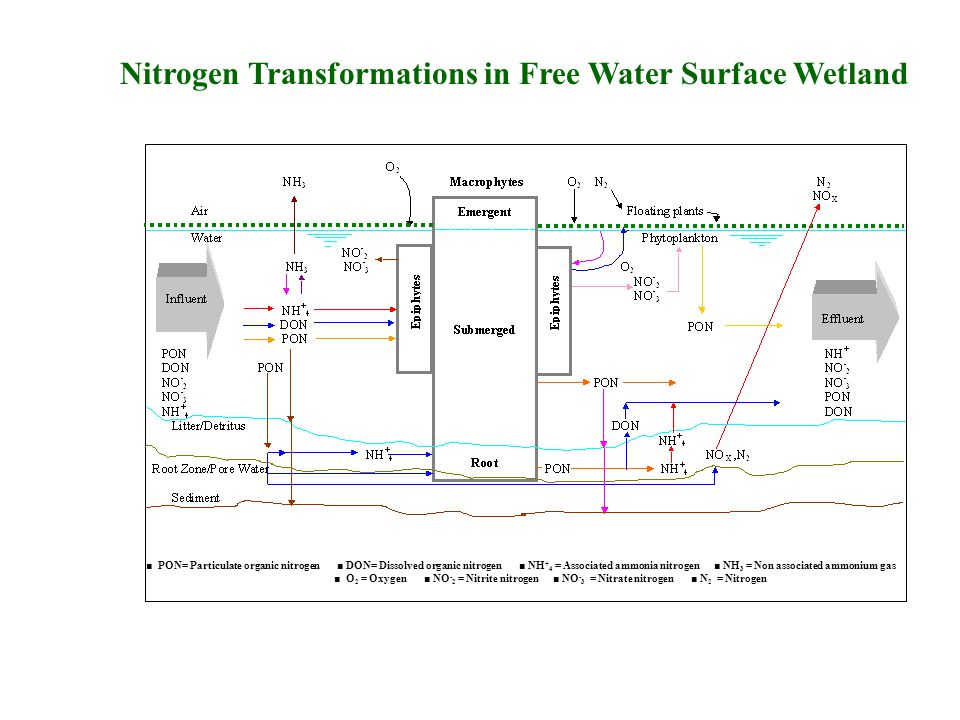Nitrogen Pathways