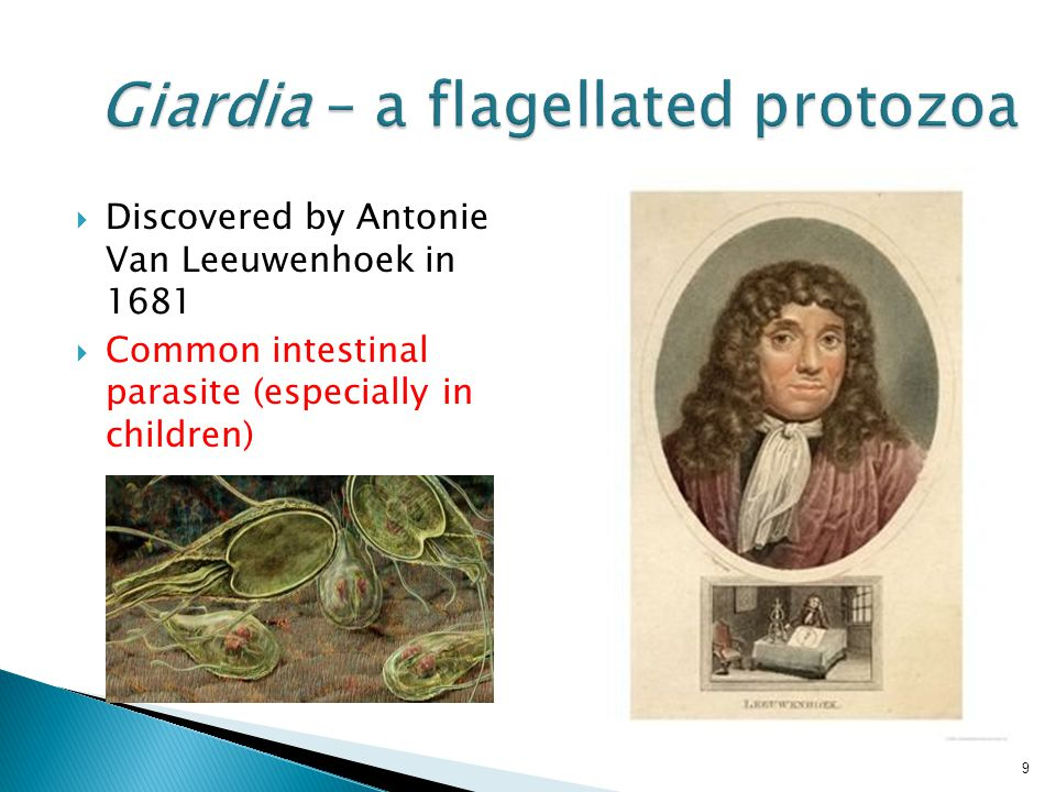 10 How does Giardia get into human body?