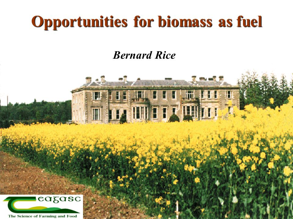 Opportunities for biomass as fuel Bernard Rice