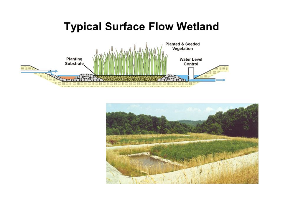 Typical Surface Flow Wetland
