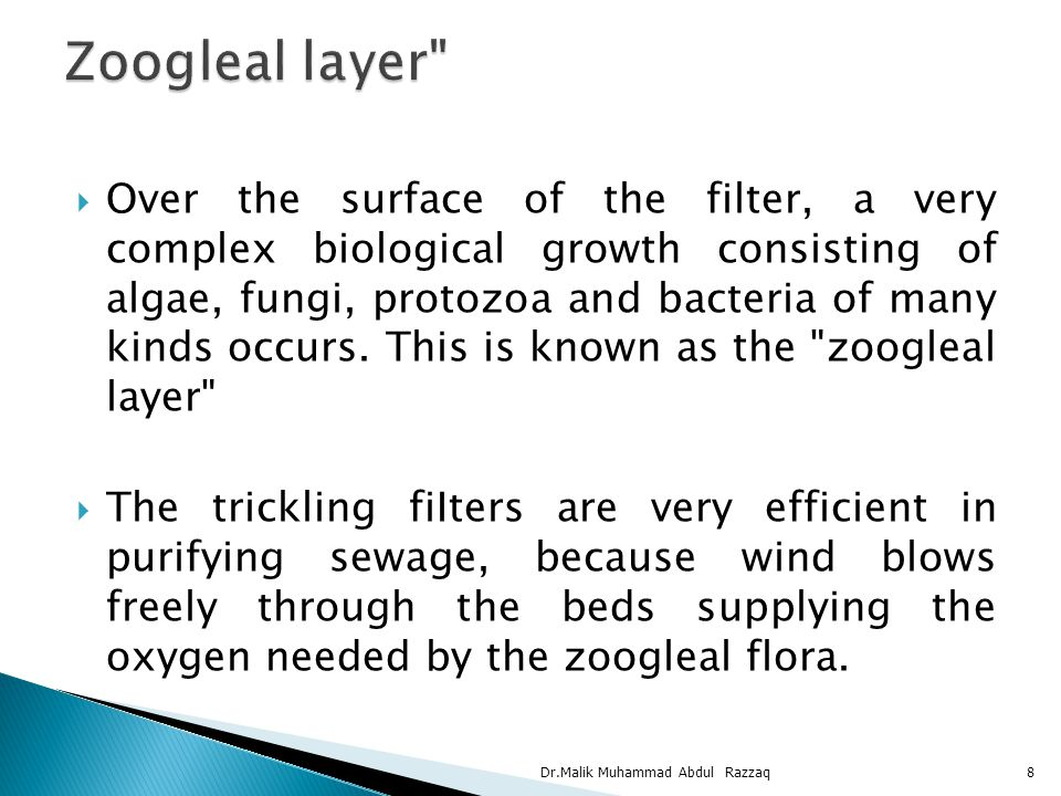  Over the surface of the filter, a very complex biological growth consisting of algae, fungi, protozoa and bacteria of many kinds occurs. This is kno
