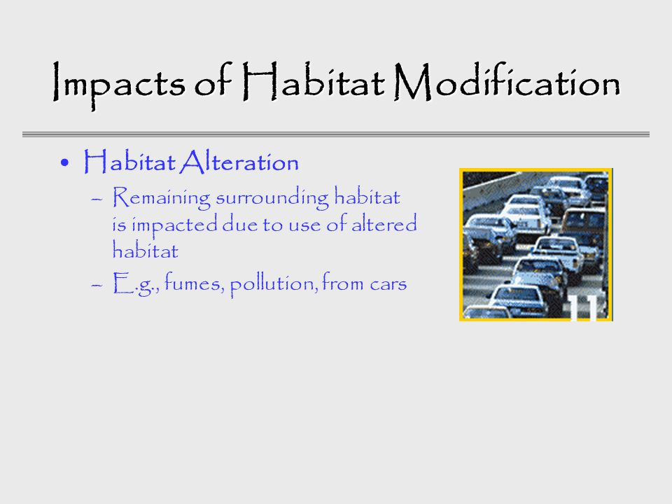Impacts of Habitat Modification Habitat Alteration –Remaining surrounding habitat is impacted due to use of altered habitat –E.g., fumes, pollution, from cars