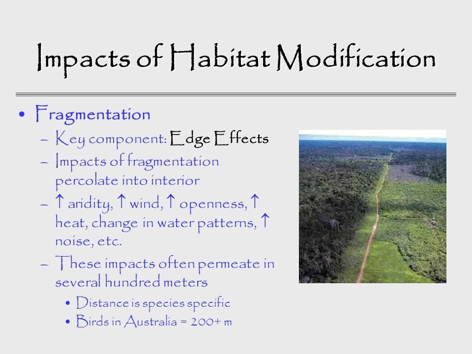 Impacts of Habitat Modification Fragmentation –Key component: Edge Effects –Impacts of fragmentation percolate into interior –  aridity,  wind,  openness,  heat, change in water patterns,  noise, etc.