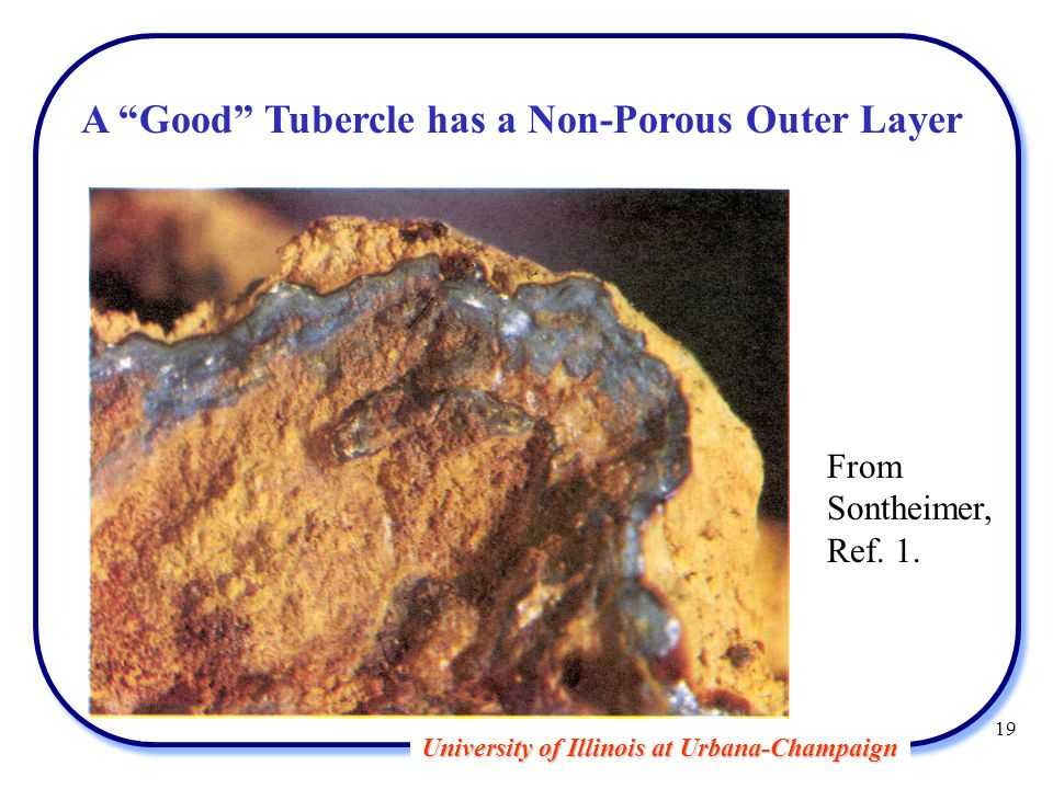University of Illinois at Urbana-Champaign A Good Tubercle has a Non-Porous Outer Layer From Sontheimer, Ref.