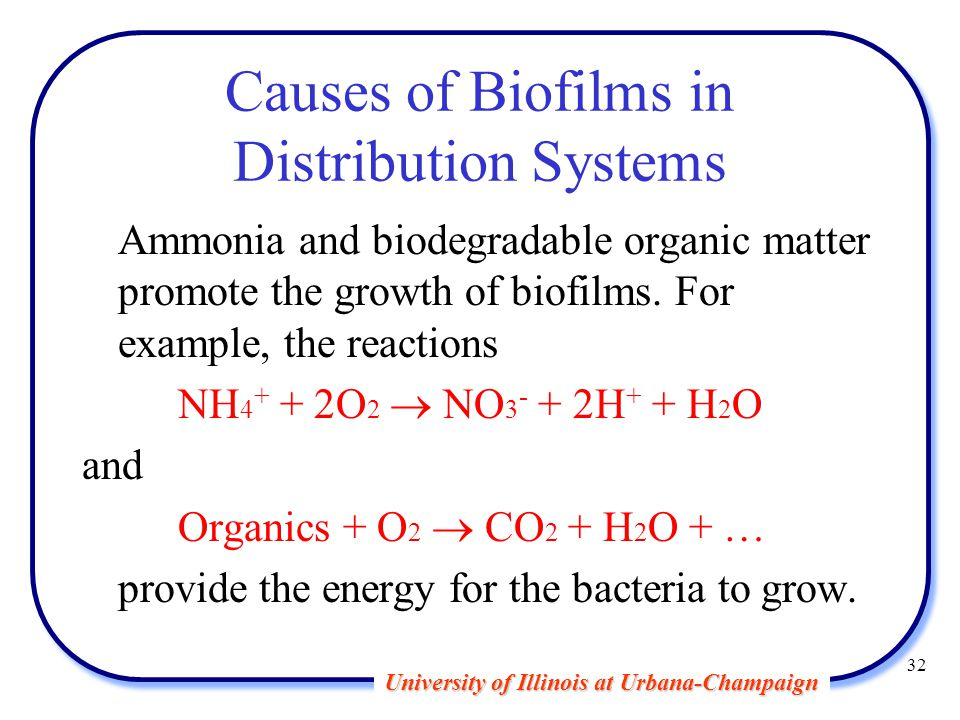University of Illinois at Urbana-Champaign 32 Causes of Biofilms in Distribution Systems Ammonia and biodegradable organic matter promote the growth of biofilms.
