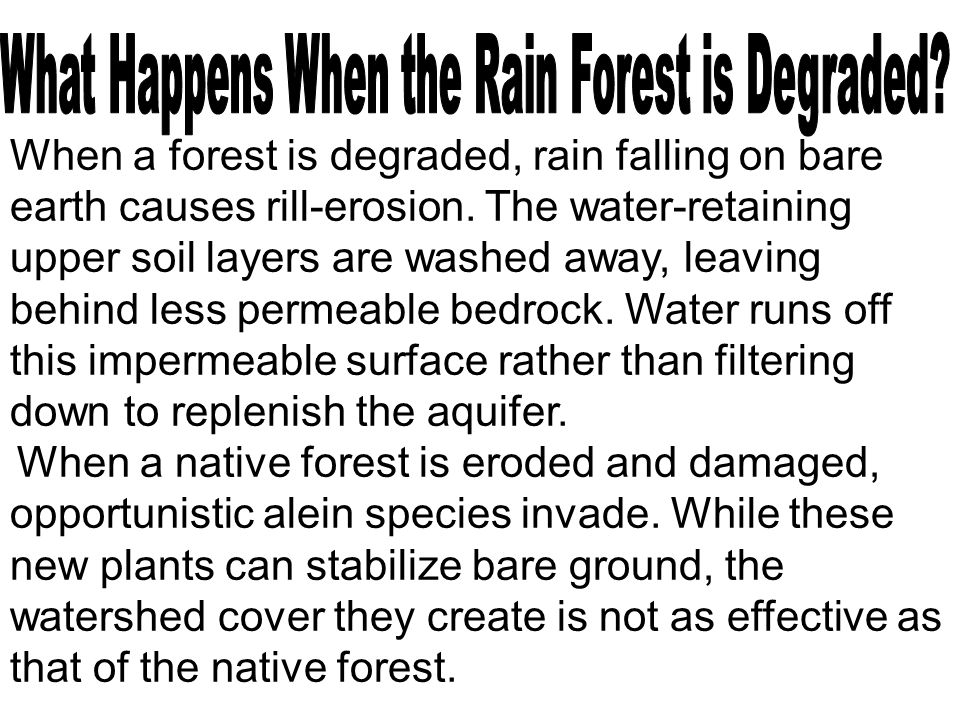 When a forest is degraded, rain falling on bare earth causes rill-erosion. The water-retaining upper soil layers are washed away, leaving behind less