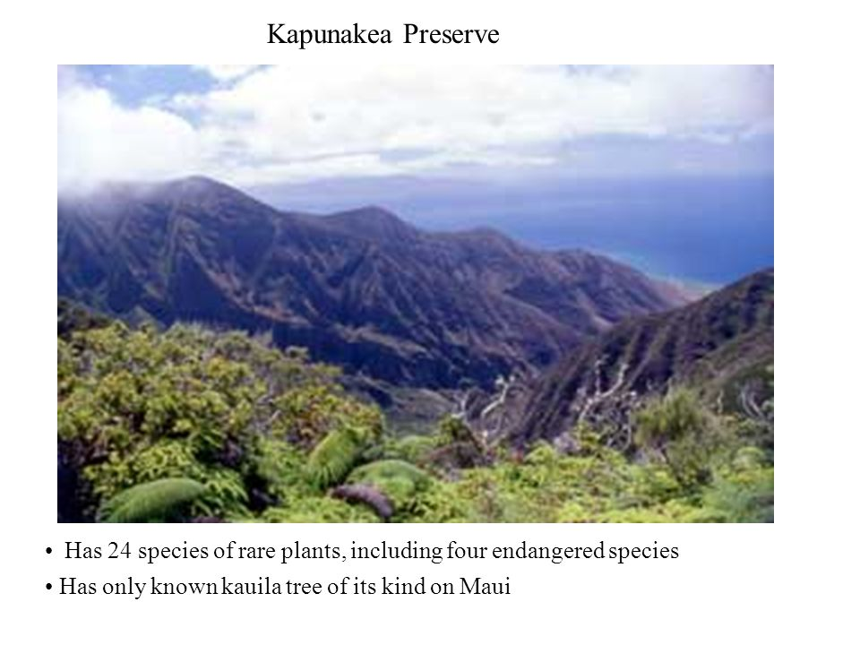 Kapunakea Preserve Has 24 species of rare plants, including four endangered species Has only known kauila tree of its kind on Maui