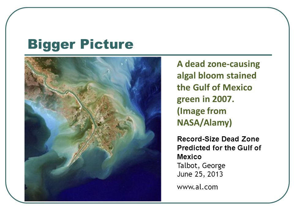 Bigger Picture A dead zone-causing algal bloom stained the Gulf of Mexico green in 2007. (Image from NASA/Alamy) Record-Size Dead Zone Predicted for t