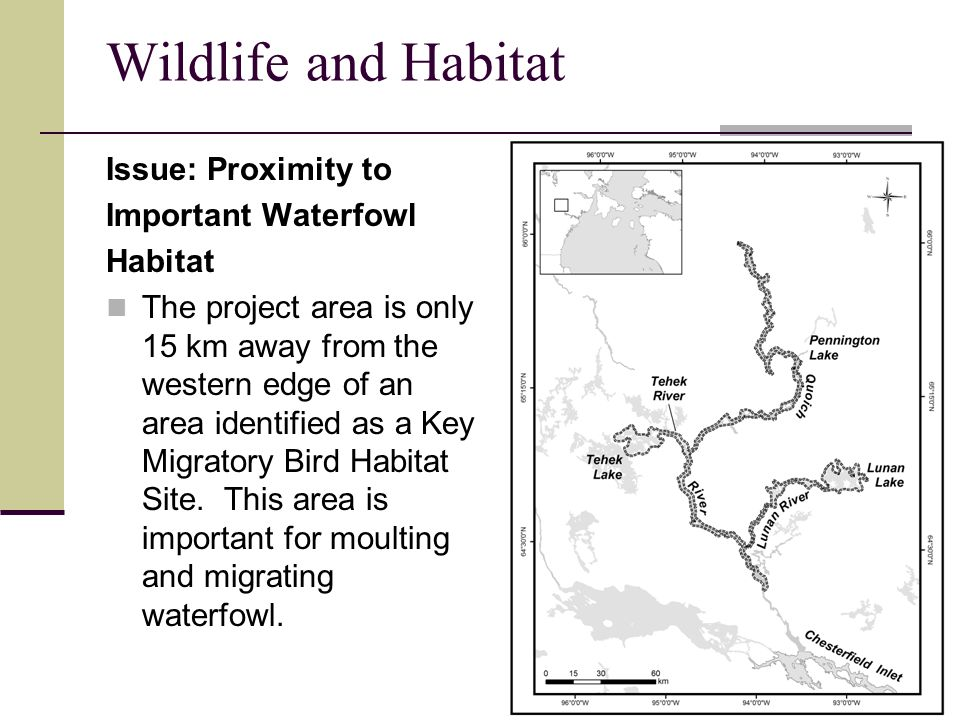 Wildlife and Habitat Issue: Proximity to Important Waterfowl Habitat The project area is only 15 km away from the western edge of an area identified as a Key Migratory Bird Habitat Site.