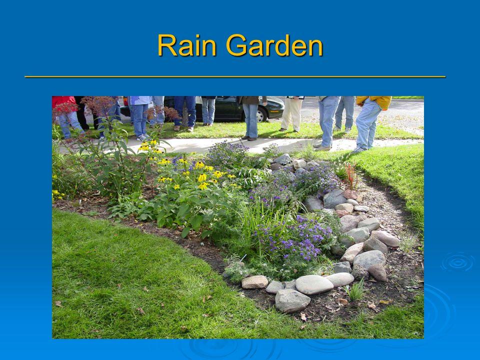 Rain Garden _______________________________________________