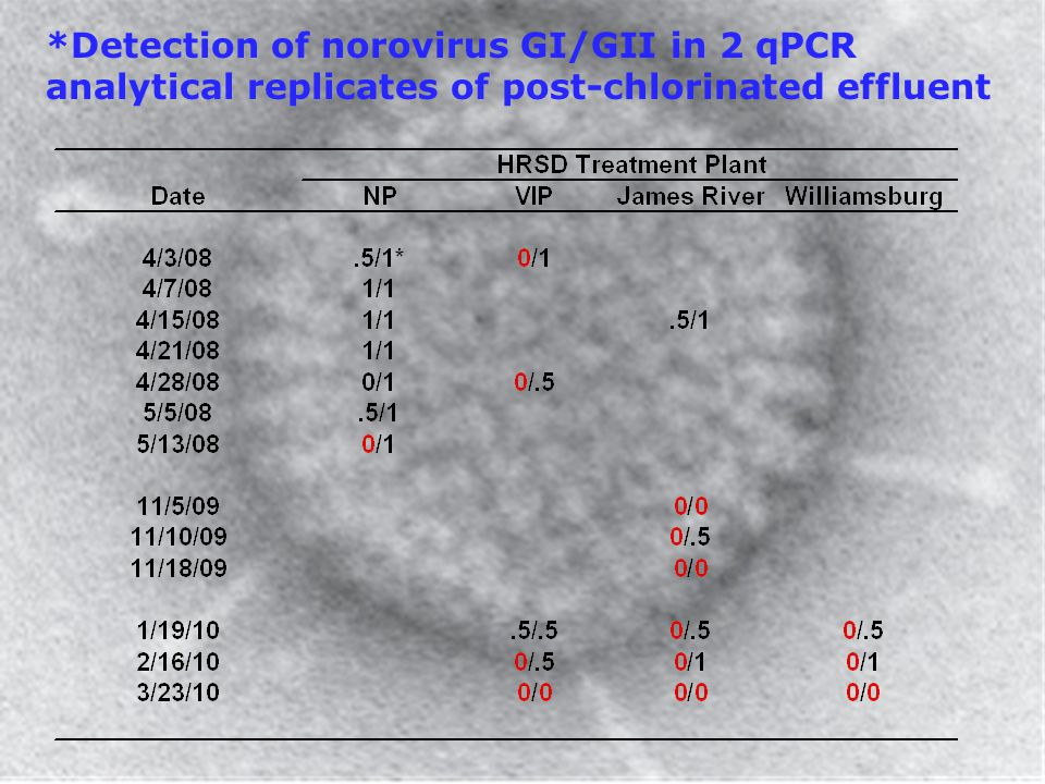 *Detection of norovirus GI/GII in 2 qPCR analytical replicates of post-chlorinated effluent