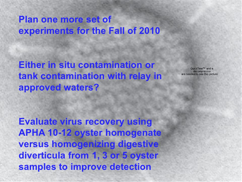 Plan one more set of experiments for the Fall of 2010 Either in situ contamination or tank contamination with relay in approved waters? Evaluate virus