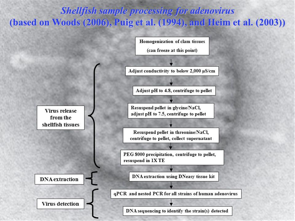 Shellfish sample processing for adenovirus (based on Woods (2006), Puig et al.