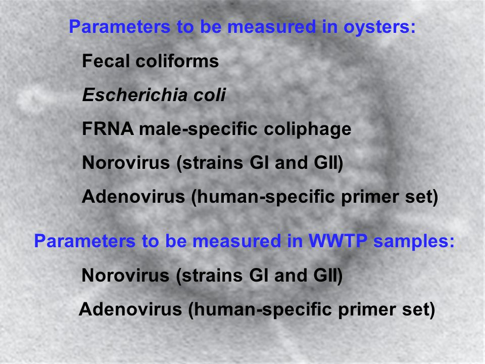Parameters to be measured in oysters: Fecal coliforms Escherichia coli FRNA male-specific coliphage Norovirus (strains GI and GII) Adenovirus (human-s
