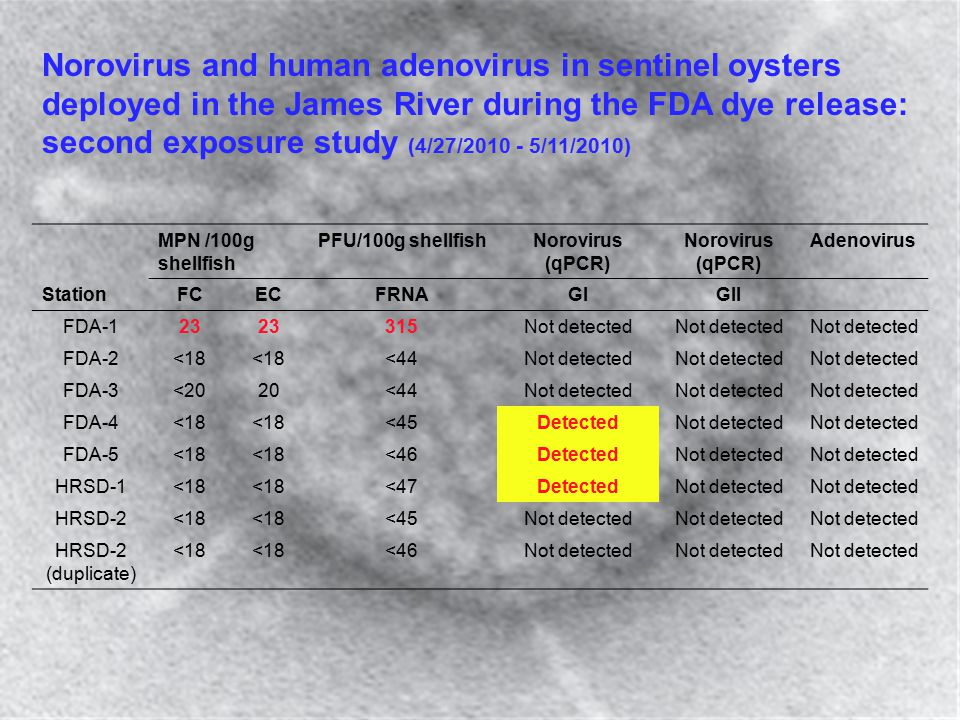Norovirus and human adenovirus in sentinel oysters deployed in the James River during the FDA dye release: second exposure study (4/27/2010 - 5/11/201