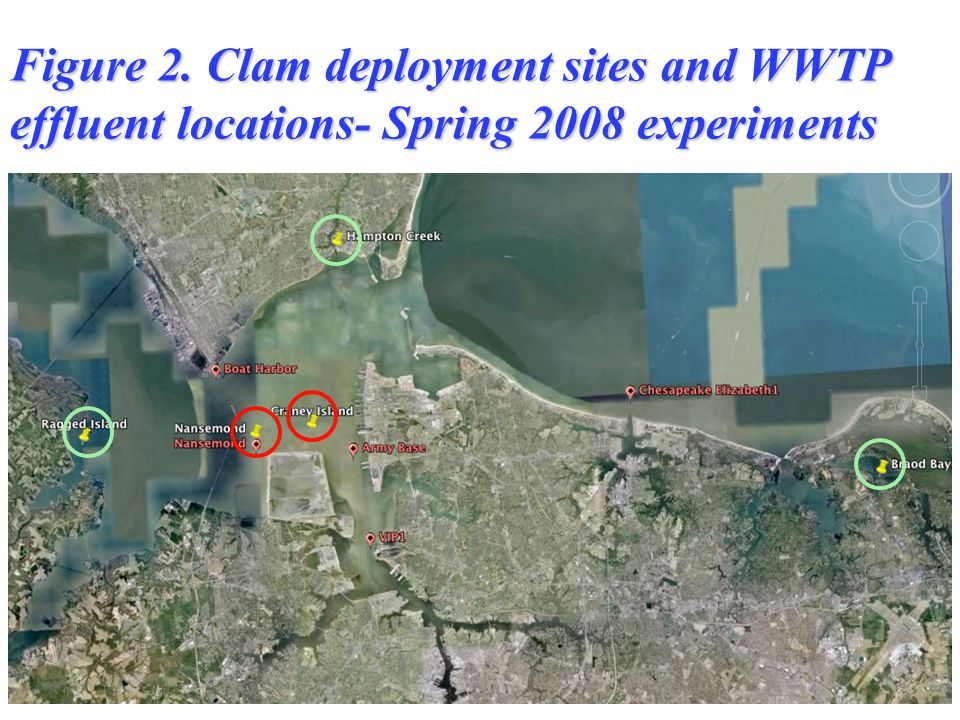 Figure 2. Clam deployment sites and WWTP effluent locations- Spring 2008 experiments