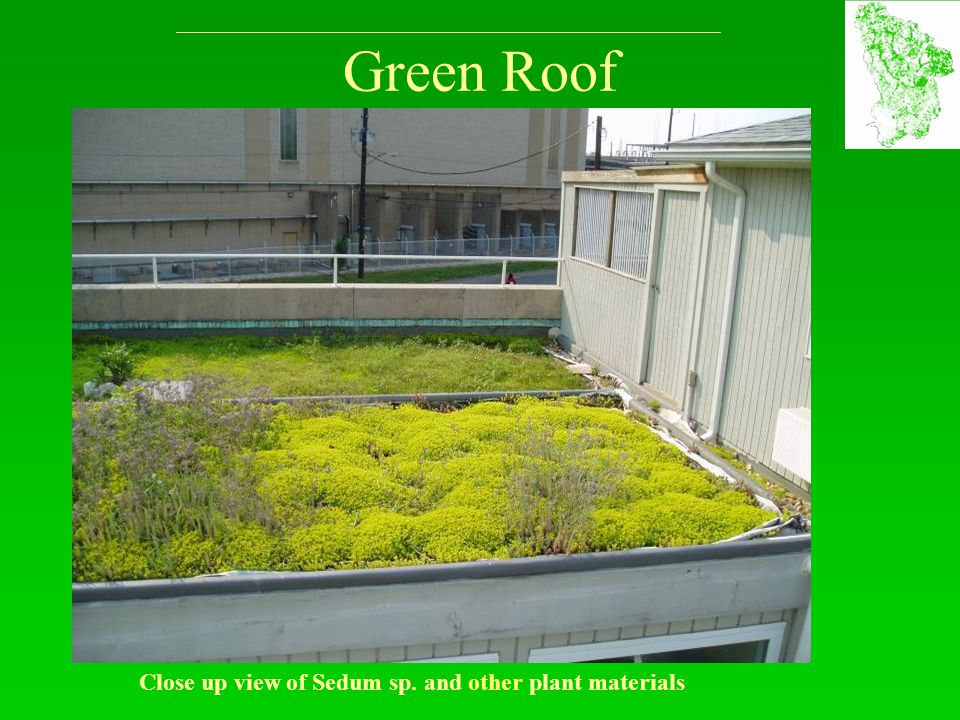 Green Roof Close up view of Sedum sp. and other plant materials