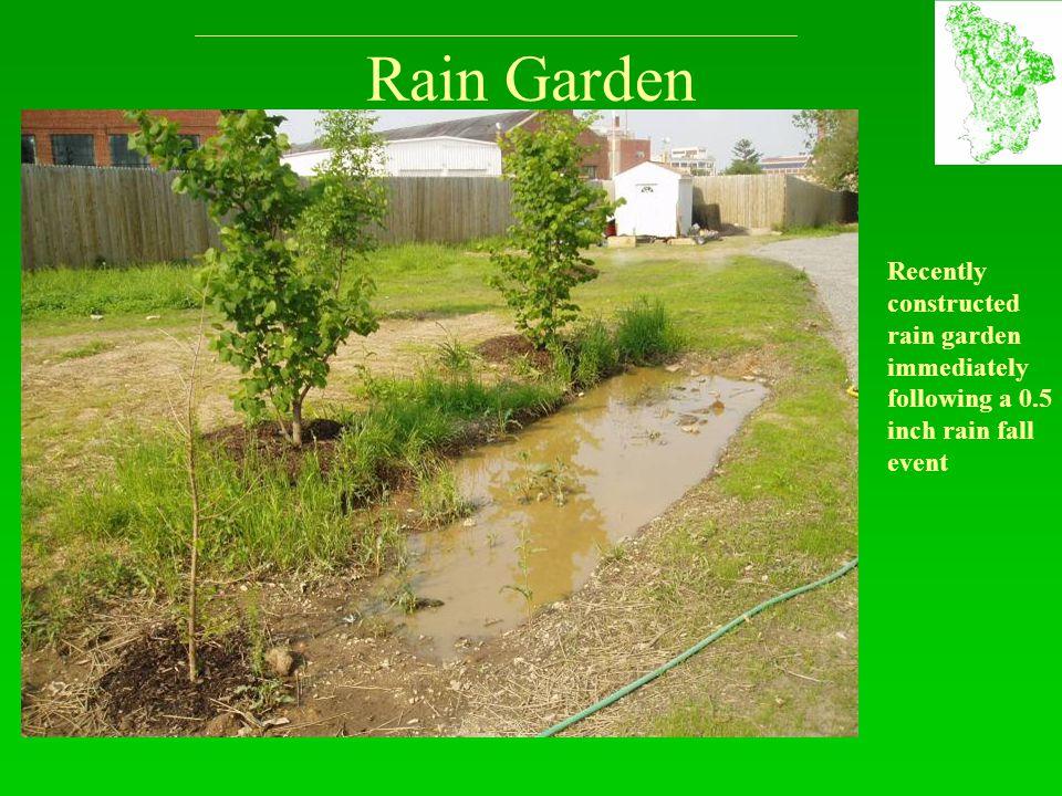 Rain Garden Recently constructed rain garden immediately following a 0.5 inch rain fall event