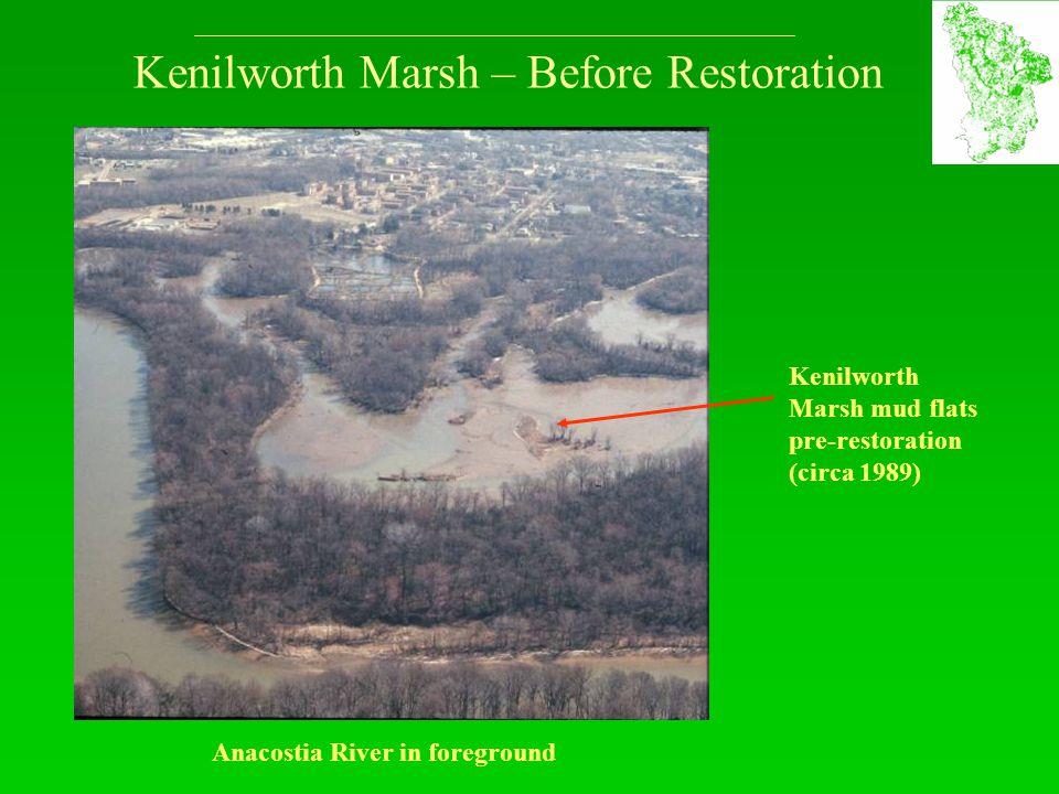 Kenilworth Marsh – Before Restoration Anacostia River in foreground Kenilworth Marsh mud flats pre-restoration (circa 1989)