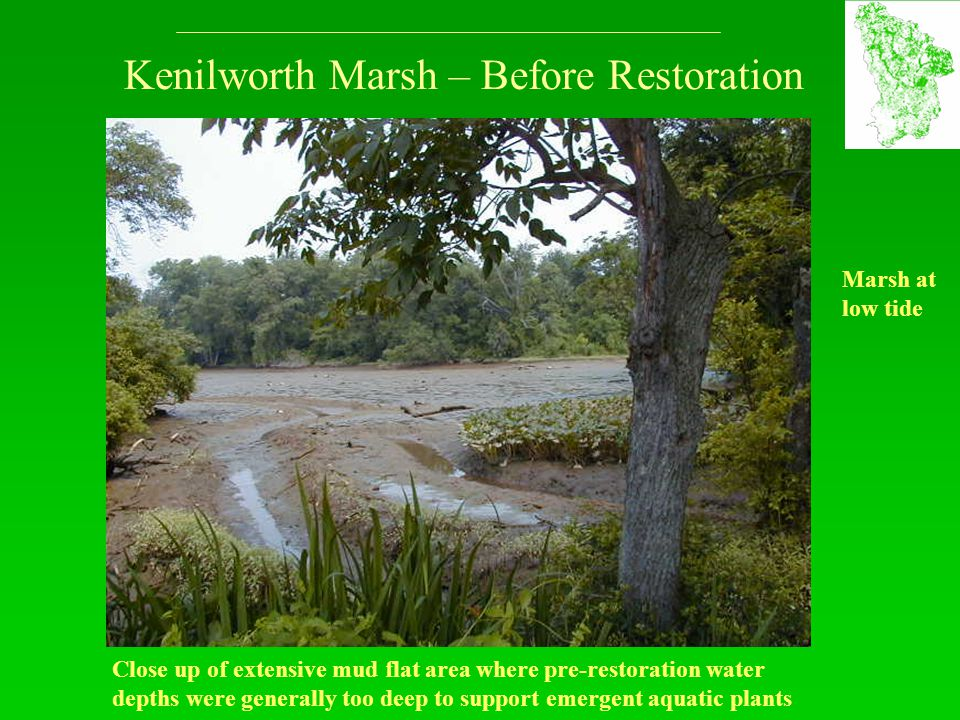 Kenilworth Marsh – Before Restoration Close up of extensive mud flat area where pre-restoration water depths were generally too deep to support emerge