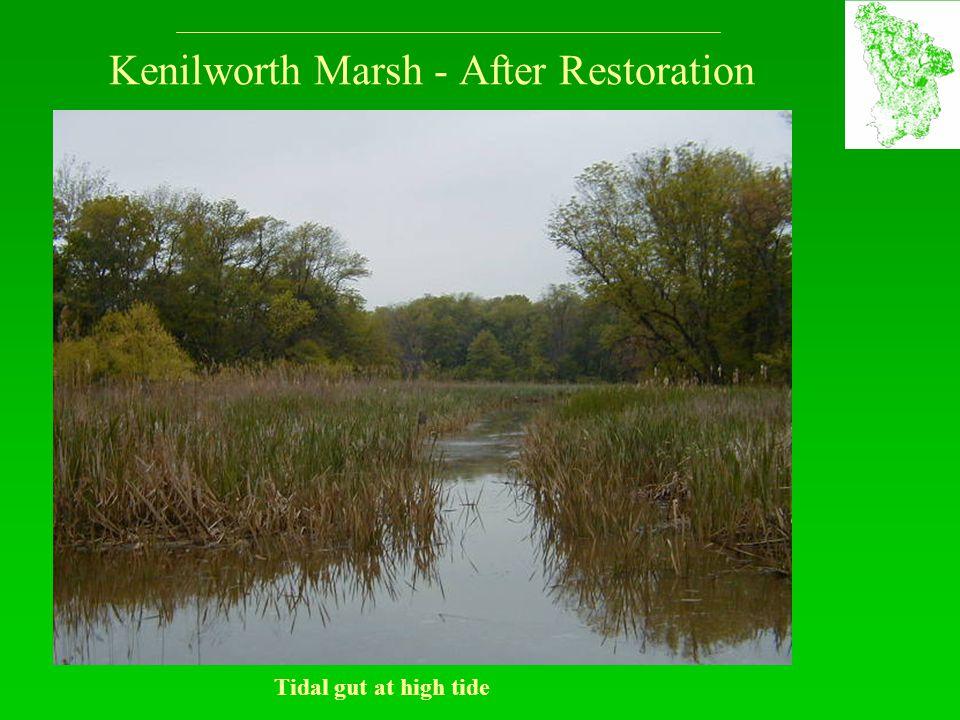 Kenilworth Marsh - After Restoration Tidal gut at high tide