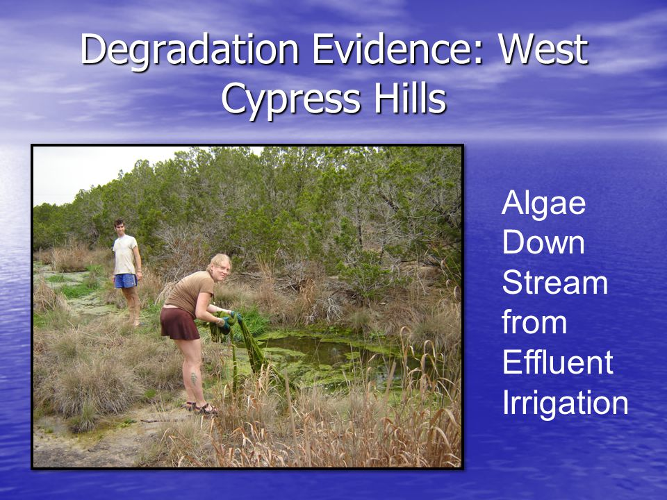 Degradation Evidence: West Cypress Hills Algae Down Stream from Effluent Irrigation