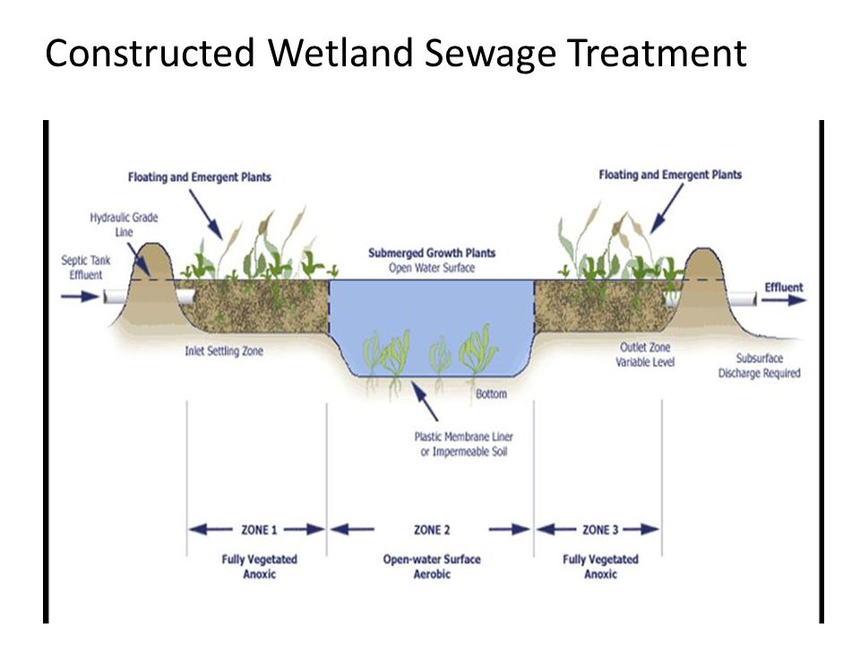 Constructed Wetland Sewage Treatment