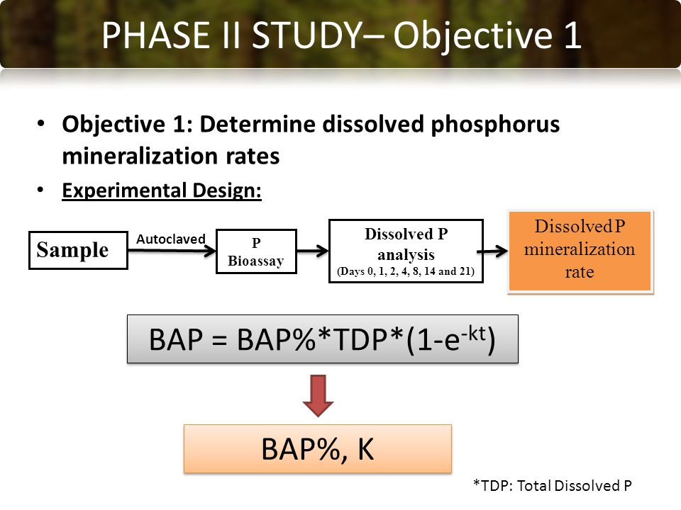 CONCLUSIONS PHASE II STUDY– Objective 1 Objective 1: Determine dissolved phosphorus mineralization rates Experimental Design: Sample P Bioassay Dissolved P analysis (Days 0, 1, 2, 4, 8, 14 and 21) Dissolved P mineralization rate Autoclaved BAP = BAP%*TDP*(1-e -kt ) BAP%, K *TDP: Total Dissolved P