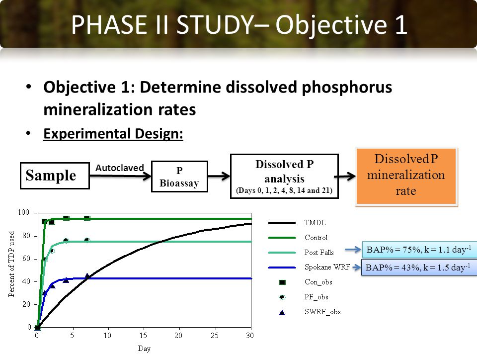 CONCLUSIONS PHASE II STUDY– Objective 1 Objective 1: Determine dissolved phosphorus mineralization rates Experimental Design: Sample P Bioassay Dissolved P analysis (Days 0, 1, 2, 4, 8, 14 and 21) Dissolved P mineralization rate Autoclaved BAP% = 75%, k = 1.1 day -1 BAP% = 43%, k = 1.5 day -1