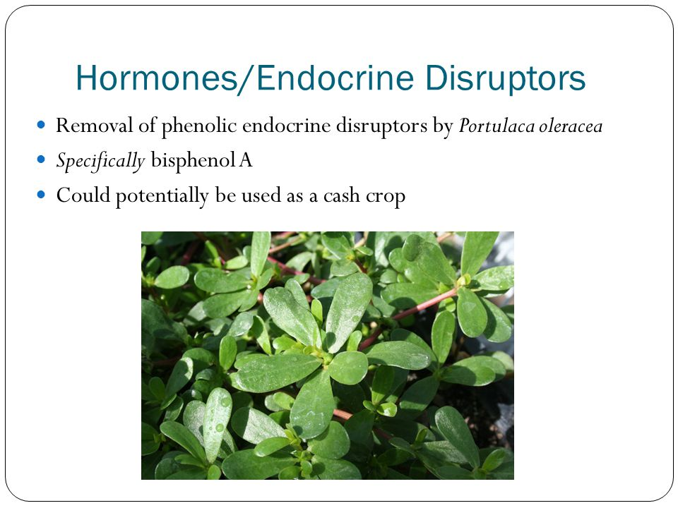Hormones/Endocrine Disruptors Removal of phenolic endocrine disruptors by Portulaca oleracea Specifically bisphenol A Could potentially be used as a cash crop