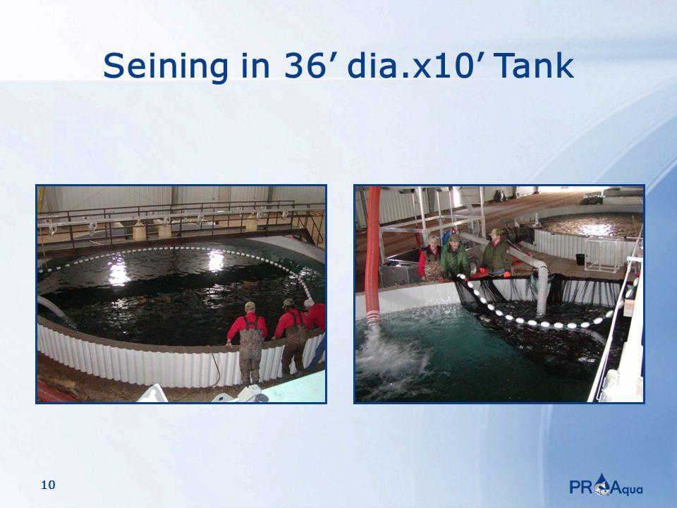 10 Seining in 36' dia.x10' Tank
