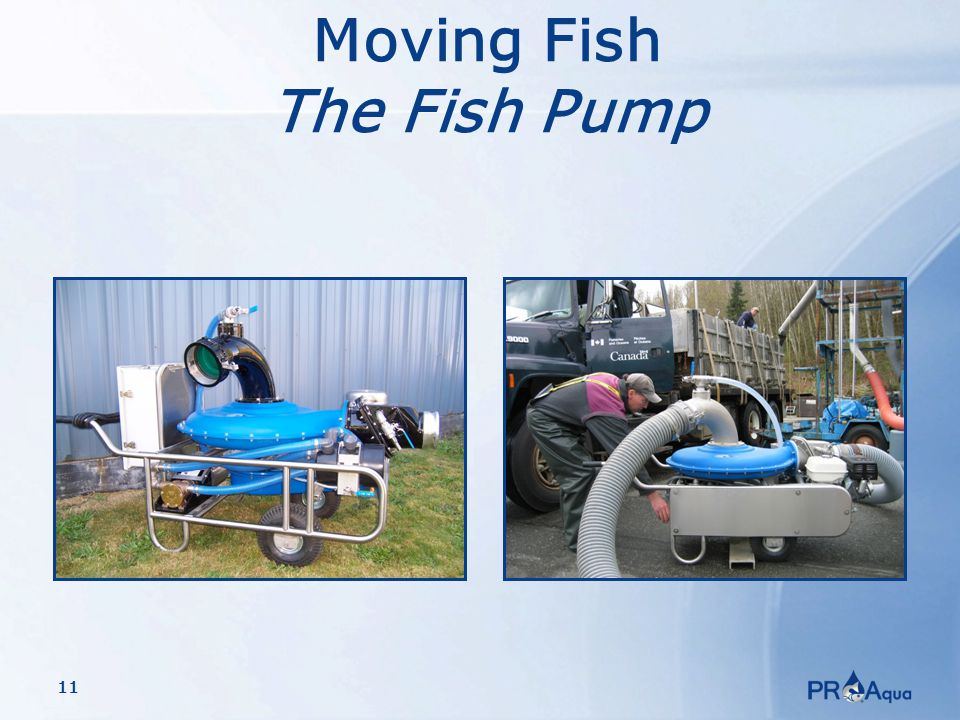 11 Moving Fish The Fish Pump
