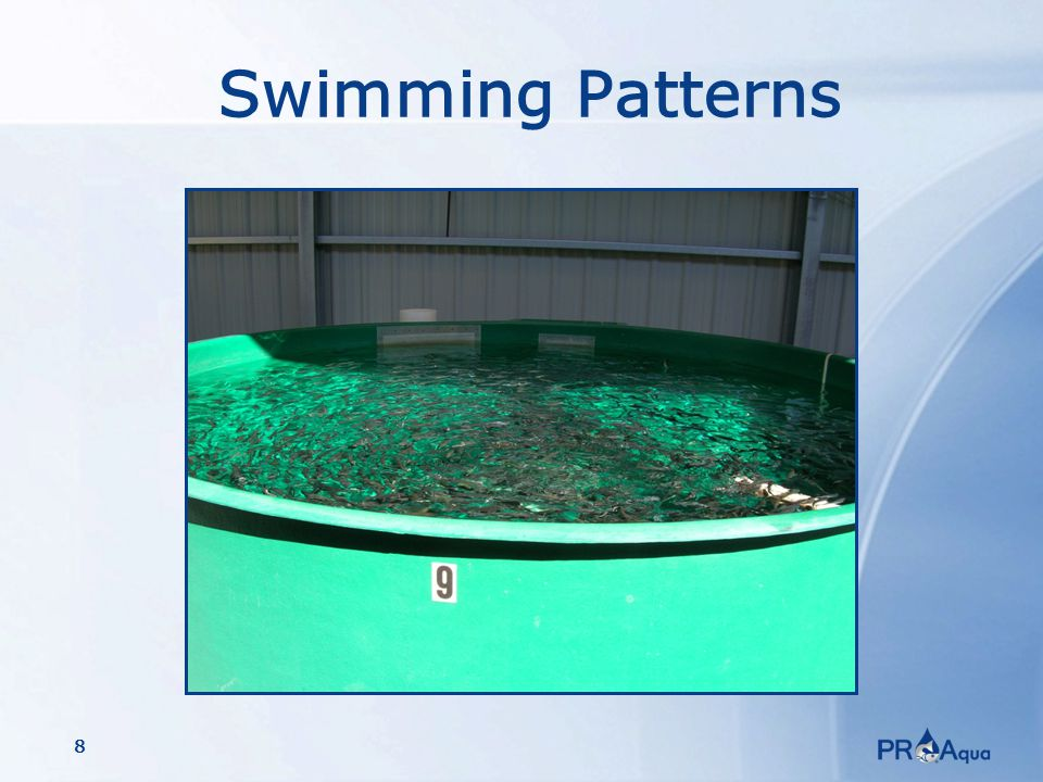 8 Swimming Patterns