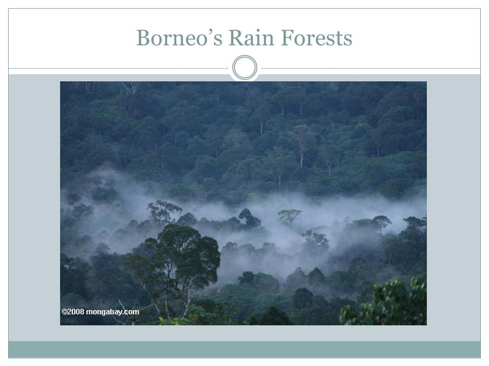Borneo's Rain Forests
