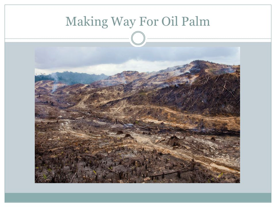 Making Way For Oil Palm