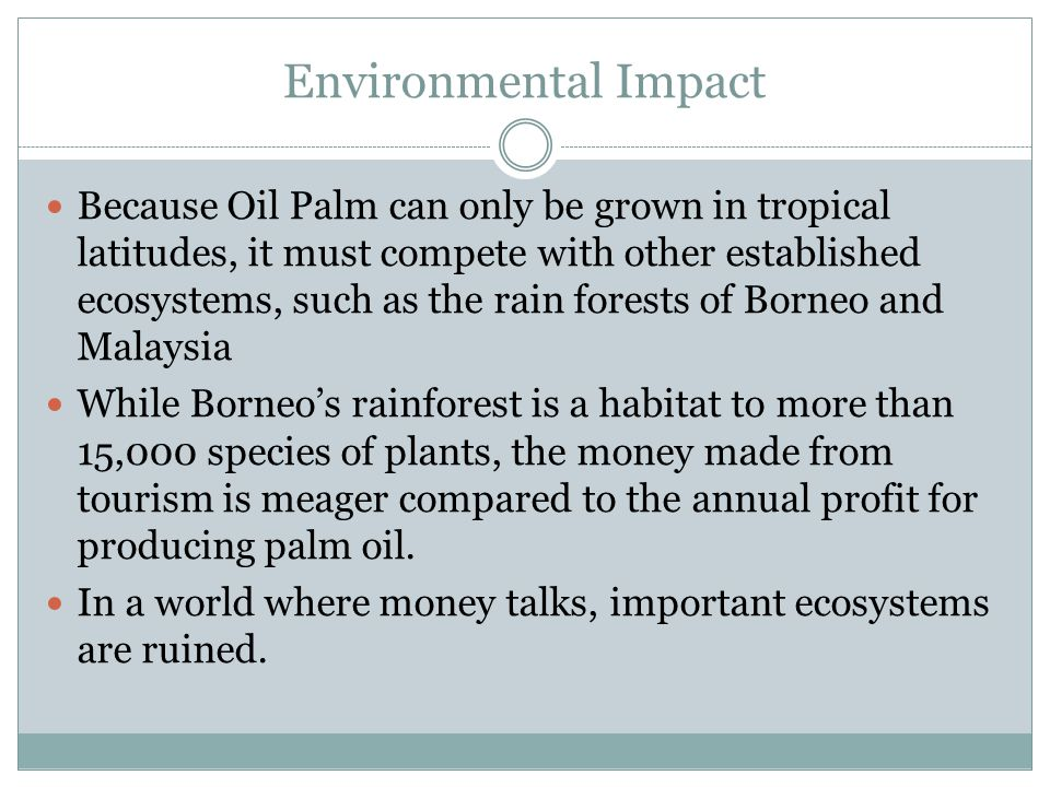 Environmental Impact Because Oil Palm can only be grown in tropical latitudes, it must compete with other established ecosystems, such as the rain forests of Borneo and Malaysia While Borneo's rainforest is a habitat to more than 15,000 species of plants, the money made from tourism is meager compared to the annual profit for producing palm oil.